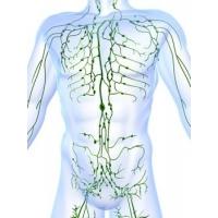 Lymfatický systém, Lymfodrenáž